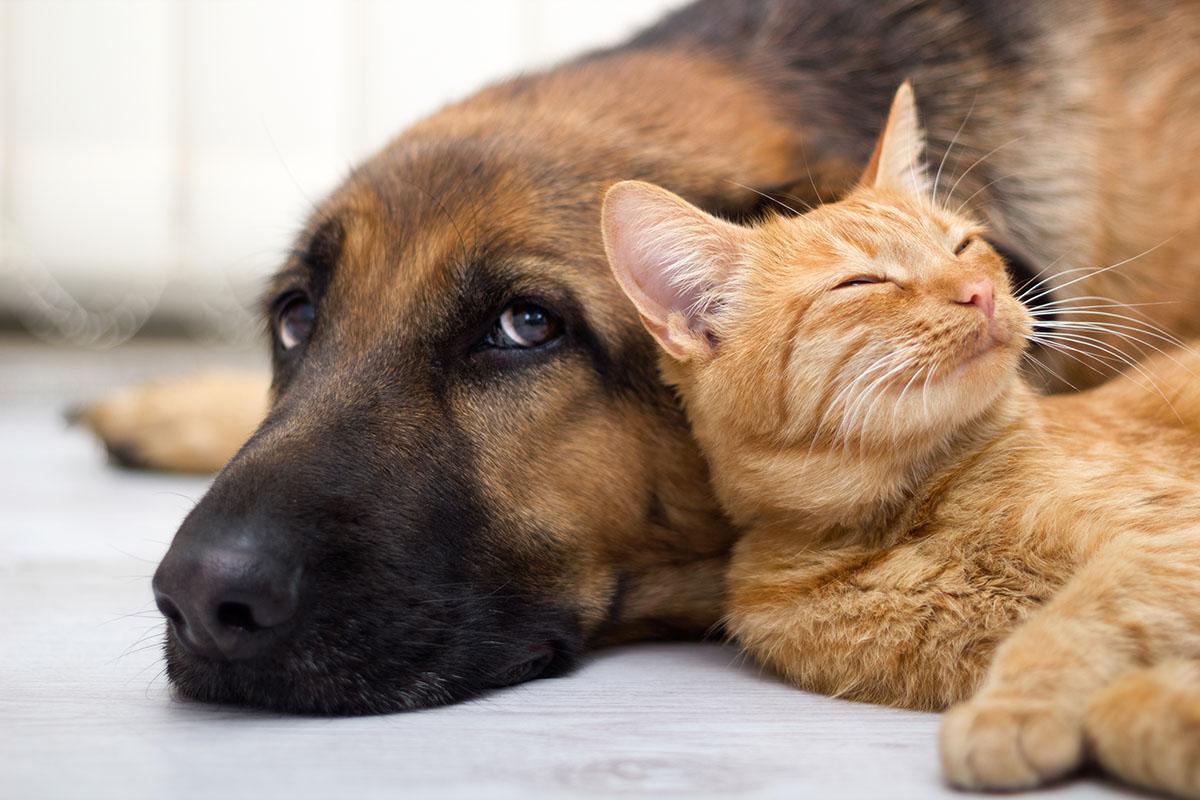 Perro bewuste diervoeding voor hond en kat